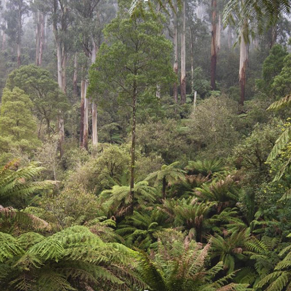 Protecting Victoria's Forests